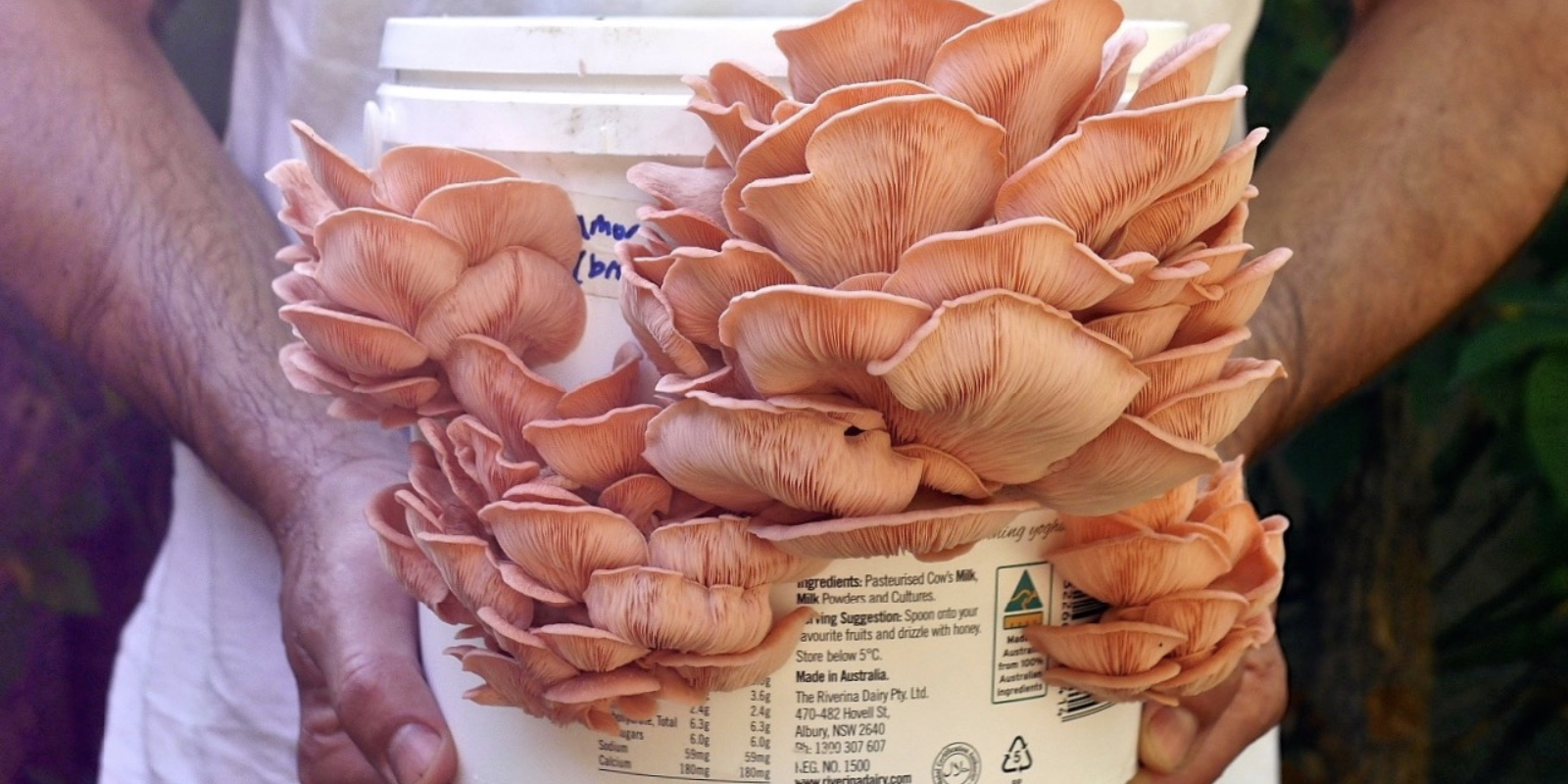 How To Grow Mushrooms in Buckets & a Wild Fungi Foraging Guide